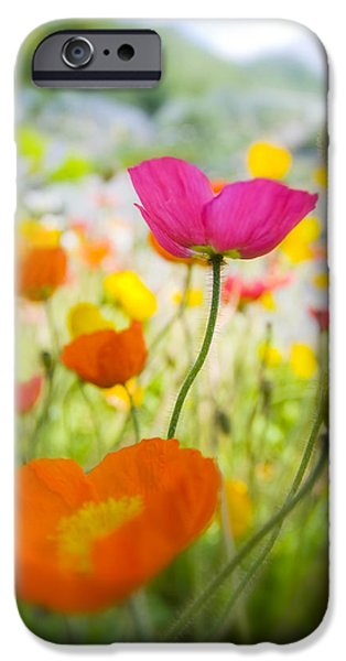 Decorativ iPhone Cases - Iceland Poppies iPhone Case by Silke Magino