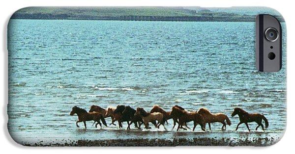 The Horse iPhone Cases - Icelandic Horses iPhone Case by Carlos Romero