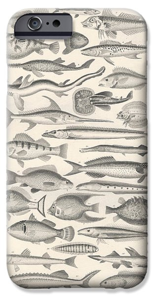 Fish Drawings iPhone Cases - Ichthyology iPhone Case by Captn Brown
