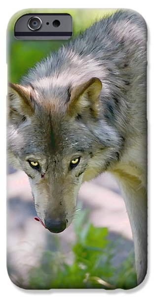 Wolf Pics Mixed Media iPhone Cases - If looks could Kill iPhone Case by Michael Cummings