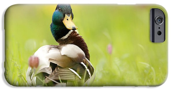 Meleagris iPhone Cases - Im Too Sexy for This Site iPhone Case by Roeselien Raimond