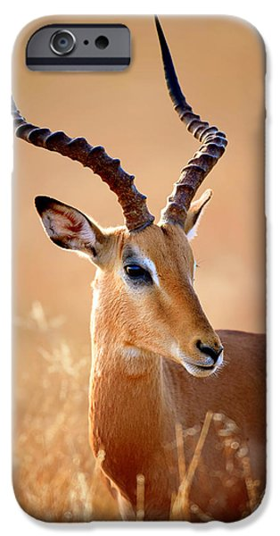 Shoulders iPhone Cases - Impala male portrait iPhone Case by Johan Swanepoel