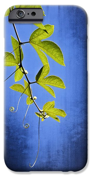 Fall iPhone Cases - In The Blue iPhone Case by Carolyn Marshall