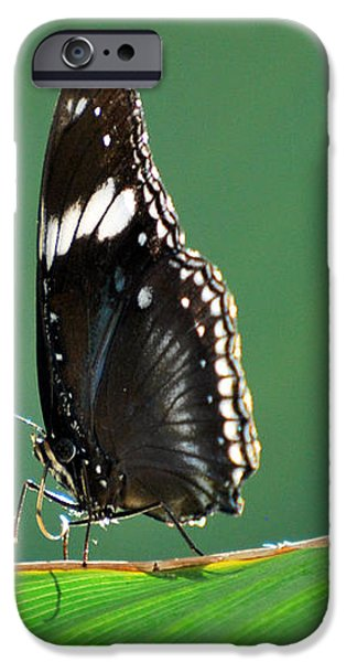 In the Limelight iPhone Case by Teresa Blanton