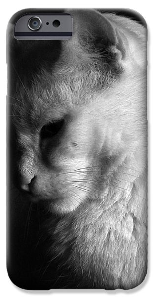 In the shadows iPhone Case by Bob Orsillo