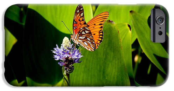 Insect Pyrography iPhone Cases - In the Spotlight  iPhone Case by Hannah Underhill