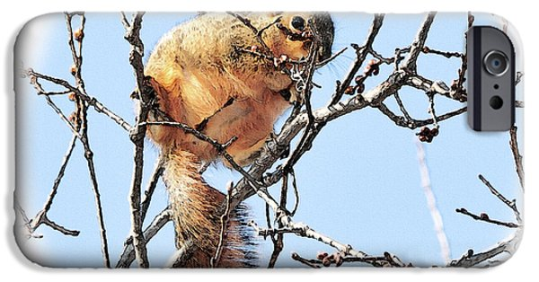 Fox Squirrel iPhone Cases - In the Tree Top iPhone Case by Betty LaRue