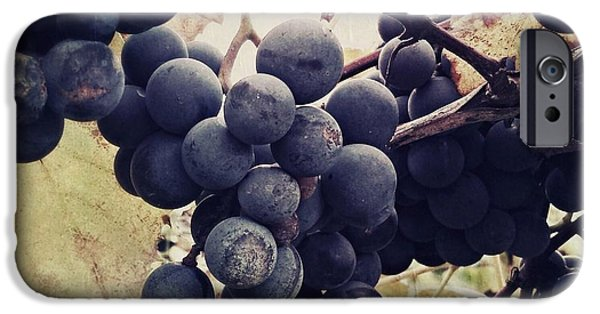 Concord Grapes iPhone Cases - In the vineyard iPhone Case by Mahalograph                                        Photography