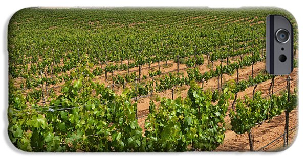 Vineyard Photograph iPhone Cases - In The Vinyard iPhone Case by Dan Holm
