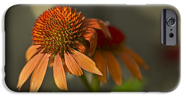 Flora iPhone Cases - Incandescent Beauty iPhone Case by F Leblanc