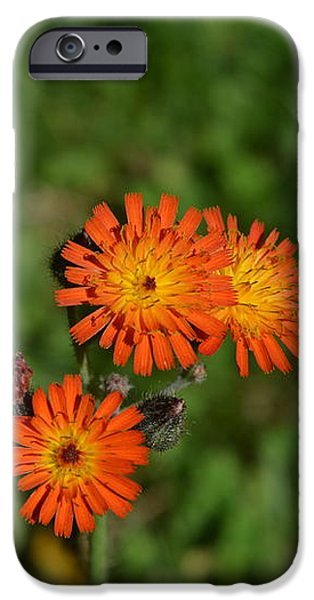 Recently Sold -  - Flora iPhone Cases - Indian Paintbrush iPhone Case by Marilyn Flanders
