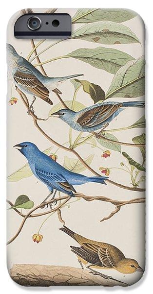 Species Paintings iPhone Cases - Indigo Bird iPhone Case by John James Audubon