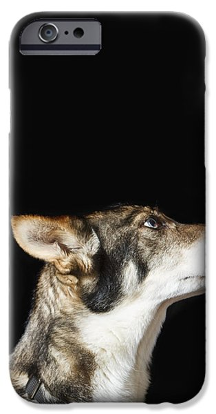 United States Traditional Sports iPhone Cases - Indoor Close Up Portrait Of Iditarod iPhone Case by Ann Matchett