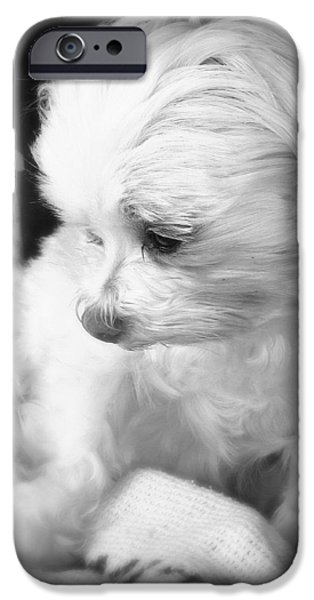 Dog Close-up iPhone Cases - Innocence iPhone Case by Soul Full Sanctuary Photography By Tania Richley