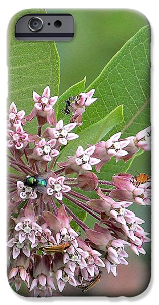 Mounds iPhone Cases - Insect Kaleidoscope iPhone Case by Robin Erisman