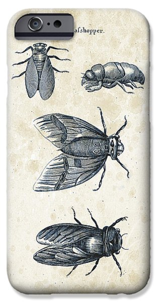Beetle iPhone Cases - Insects - 1792 - 07 iPhone Case by Aged Pixel