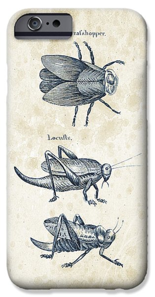 Beetle iPhone Cases - Insects - 1792 - 08 iPhone Case by Aged Pixel