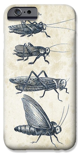 Beetle iPhone Cases - Insects - 1792 - 09 iPhone Case by Aged Pixel