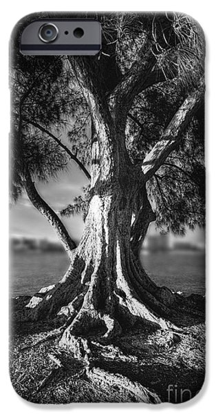 Pathway iPhone Cases - Intercoastal Pine iPhone Case by Marvin Spates