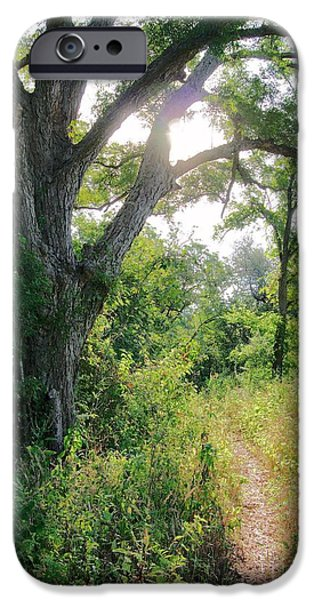 Pathway iPhone Cases - Into the Light iPhone Case by Gary Richards
