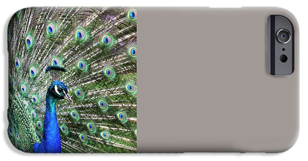 Peafowl iPhone Cases - Iridescent eyes iPhone Case by Tim Gainey