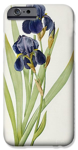 Botanical iPhone Cases - Iris Germanica iPhone Case by Pierre Joseph Redoute