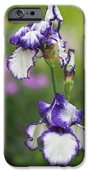 Botany Photographs iPhone Cases - Iris Loop the Loop  iPhone Case by Rona Black
