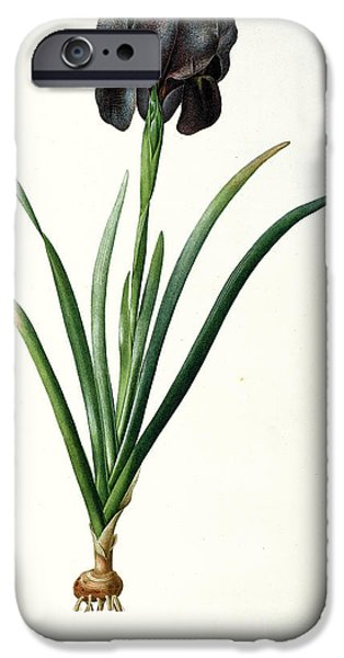 Lilac iPhone Cases - Iris Luxiana iPhone Case by Pierre Joseph  Redoute