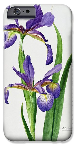 Floral iPhone Cases - Iris monspur iPhone Case by Anonymous