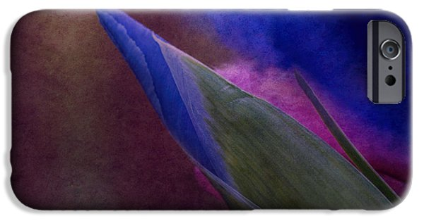 Fauna iPhone Cases - Iris To The Point iPhone Case by Arlene Carmel