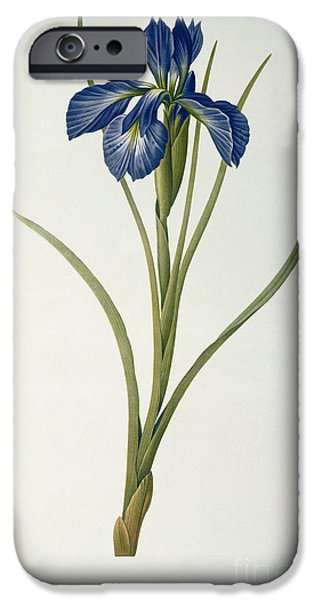 Horticulture iPhone Cases - Iris Xyphioides iPhone Case by Pierre Joseph Redoute