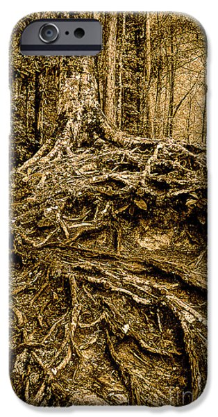 Tree Roots iPhone Cases - Its Complicated iPhone Case by Michael Eingle