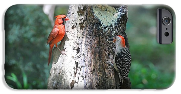 Feeding Birds iPhone Cases - Its Nice to Share iPhone Case by Carol Groenen