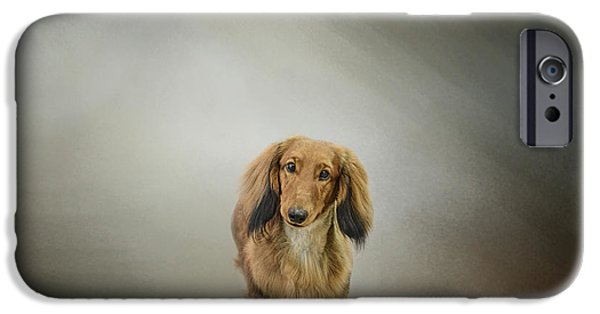 Dachshund Art iPhone Cases - Its Showtime Baby - Dachshund iPhone Case by Jai Johnson