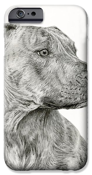 Dog Close-up Drawings iPhone Cases - Ittie Bittie Pittie iPhone Case by Sarah Batalka