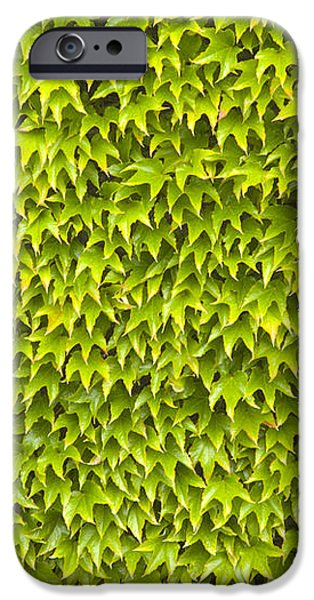 Ivy Wall iPhone Case by Andy Smy