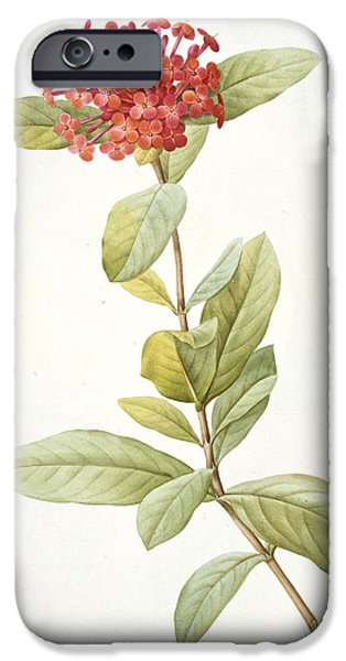 Flora Drawings iPhone Cases - Ixora speciosa iPhone Case by Pierre Joseph Redoute