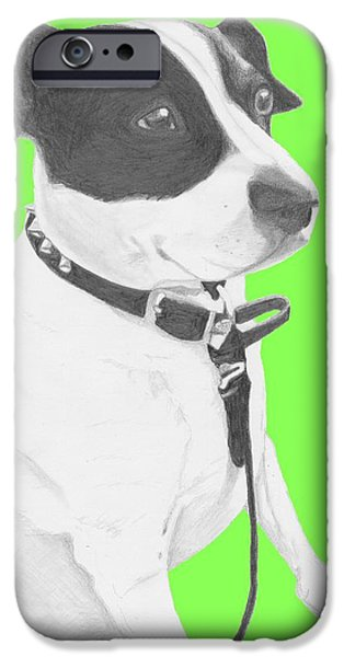 Pet iPhone Cases - Jack Russell Cross with Green Background iPhone Case by David Smith