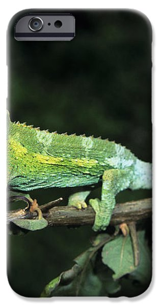 Jacksons Chameleon on Branch iPhone Case by Dave Fleetham - Printscapes