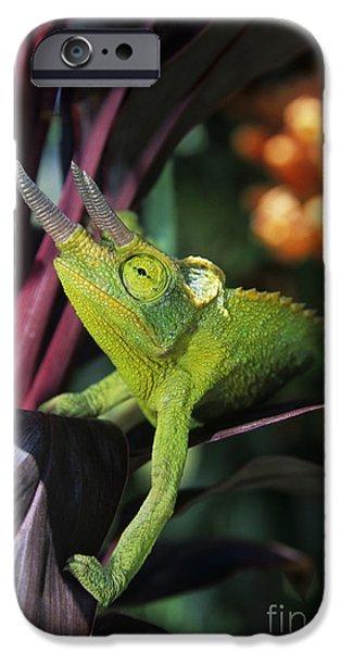 Jacksons Chameleon on Leaf iPhone Case by Dave Fleetham - Printscapes