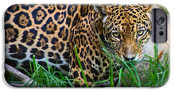 Strong America iPhone Cases - Jaguar in Grass iPhone Case by Jamie Pham