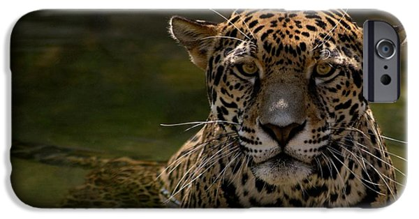 Evansville iPhone Cases - Jaguar in the Water iPhone Case by Sandy Keeton