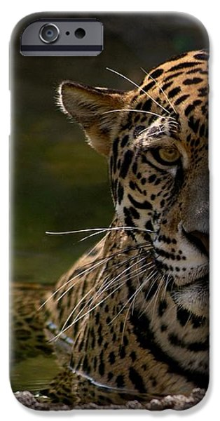 Jaguar in the Water iPhone Case by Sandy Keeton