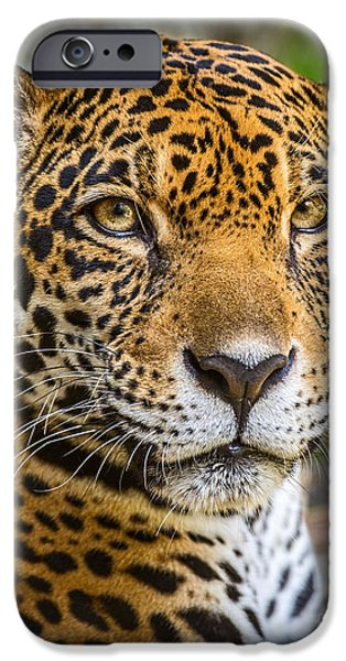 Strong America iPhone Cases - Jaguar Portrait iPhone Case by Jamie Pham