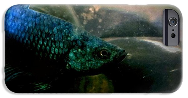 Betta iPhone Cases - Jakhodas face iPhone Case by LKB Art and Photography