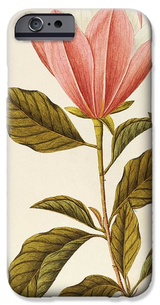 Flora Drawings iPhone Cases - Japanese Bigleaf Magnolia iPhone Case by Angela Rossi Bottione