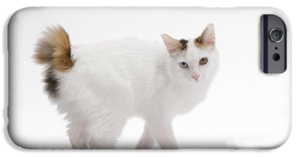 Bob Cats iPhone Cases - Japanese Bobtail Cat iPhone Case by Jean-Michel Labat