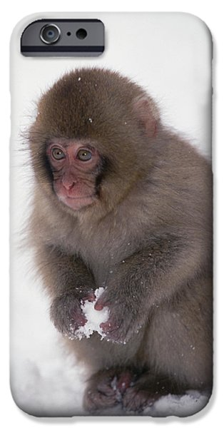 Best Sellers -  - Fauna iPhone Cases - Japanese Macaque Macaca Fuscata Baby iPhone Case by Konrad Wothe