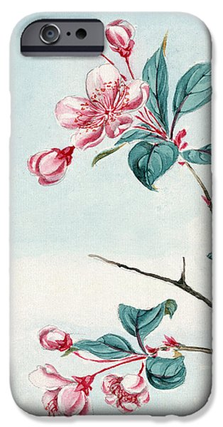 Flora Drawings iPhone Cases - Japanese Plum Flowers and Petals and Leaves in Pink and Green Color iPhone Case by Jelena Ciric