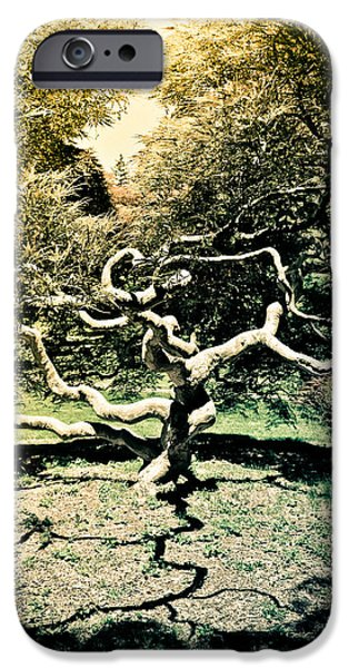 Tree Art Print iPhone Cases - Japanese Threadleaf iPhone Case by Colleen Kammerer